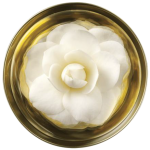 The Body Shop - коллекция Oils of Life-8